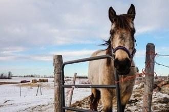 Cavallo free horse-1245923__340