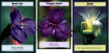 3-bush-flower-essences