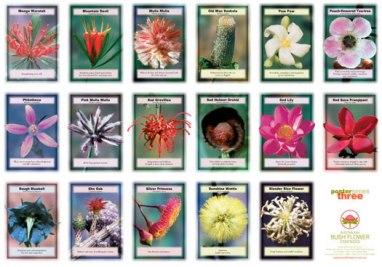 Fiori Australiani.Fiori Australiani Bush Flowers Essences Community Olistica