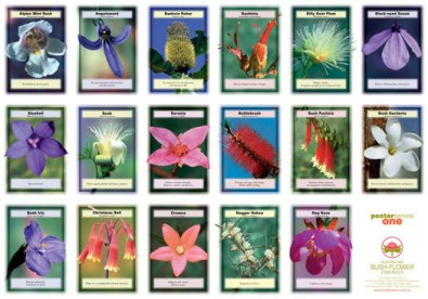 fiori-australiani